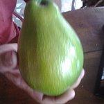 Avocado pear, grown @ The Plantation.