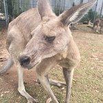 Foto di Lone Pine Koala Sanctuary