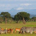 Foto de Meru Mountain Treks and Safaris Ltd - Day Tours