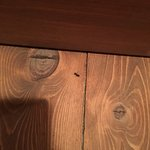 Insect (? Carpenter Ant?). Found several of these!