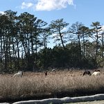 Chincoteague National Wildlife Refuge Foto