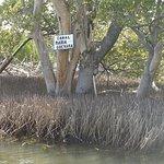 Laguna de la Restinga Foto