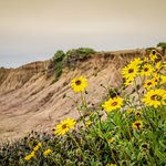 sunset cliffs Blumen