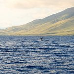Humpback Whales!