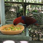 Foto di Wildlife Habitat Port Douglas