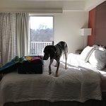 Wonderful, dog-friendly hotel!