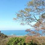 orca-image-1489416755256_large.jpg