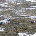Seals on the beach outside No. 1 Broughton