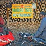Mango Tree!!