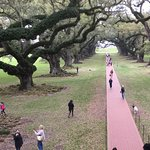 Alley of Oak trees looking from the Gallery towards the Mississippi