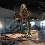 Foto de The Field Museum