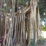 Dominica Botanic Gardens Photo