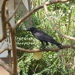 The garden has a variety of bird life