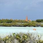 Photo of Flamingo Sanctuary