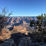 My best shot of The Grand Canyon seen through small trees
