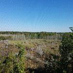 View of Marsh from screened balcony