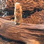 Prager Zoo Foto