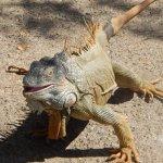 Photo de Arch's Iguana  and Marine Park