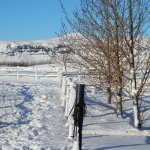 The fields in snow