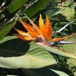 Foto de Vallarta Botanical Gardens