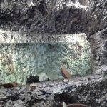 Acquario nella parete di roccia nel locale ristorante