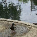 Ducks wandering around