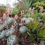 Front succulent garden