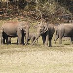 Elephants putting on a show on the bank