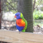 The lorikeet aviary is a must-do for bird lovers. Cups of nectar are just $1.50.