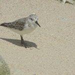 Bird along the north shore