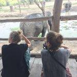 Foto de ElephantsWorld