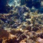 West Bay snorkel