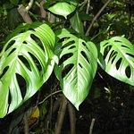 Odd Leaves