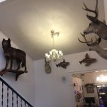 Taxidermy in the foyer