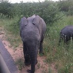 Photo of The Other Animals Safaris