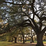 Photo of Forsyth Park