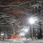 Photo of Maruyama Park