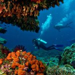 Great coral diving.