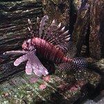 Foto de Underwater World Sea Life Mooloolaba