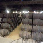 Barrels full of Port Wine