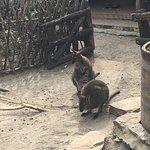 Photo de Budapest Zoo & Botanical Garden