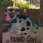 The Island Cow Foto