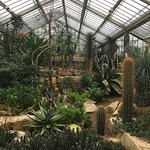 Cacti and succulent area