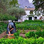 Photo de Agriturismo Guthiddai