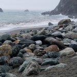 Beautiful rocks along coastline at Limekiln State Park