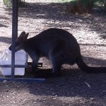 Photo of Healesville Sanctuary