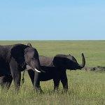 My last safari for this season. Northern serenget.