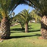 Palmiers dans les jardins