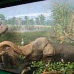 Elephants and rhino