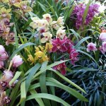 Many different types of orchids in all kinds of colors